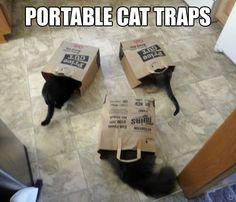 LOL! #Cats