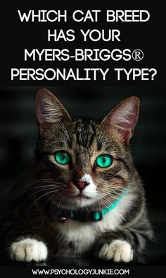 Which Cat Breed Fits Your Myers-Briggs® Personality Type – Psychology Junkie Myers Briggs Personalities, Myers Briggs Personality Types, Mbti Personality, Personality Profile, 16 Personalities, Boy Cat Names, Pet Names, Kitten Names, Pets