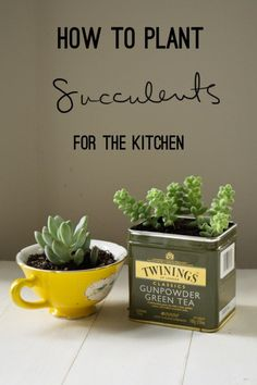 Succulents Crafts and DIY Projects - Kitchen Succulents - How To Make Fun, Beautiful and Cool Succulent Cactus Wedding Favors, Centerpieces, Mason Jar Ideas, Flower Pots and Decor diyjoy.com/...
