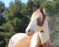 Ik mis toch het paardrijden als ik zo een prachtdier zie...hmmm