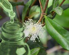 Food Tips, Food Hacks, Holistic Medicine, Osho, Alternative Medicine, Natural Remedies, Healing, Herbs, Plants
