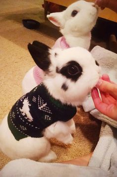 Sweater buns <3