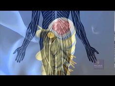 What Is Chiropractic? By Palmer College Call McNamara Chiropractic 770-781-4200