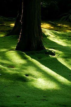 Douceur de mousse, tendre lumière ambiance zen. www.fengshuiconsult.be FcC Moss garden in Kyoto, Japan