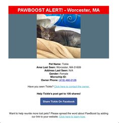 Lost Female Cat Named Tickle: Worcester, MA Female Cat, Cat Names, Have You Seen, Worcester, Lost & Found, Cat Lady, Cats, Gatos, Cat