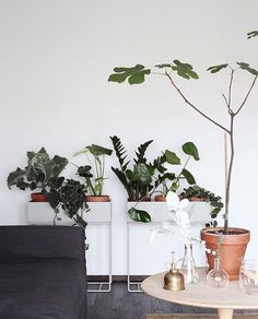 Susanna Vento for Sato - lovely green plants in Ferm Living plant stands Interior Plants, Interior And Exterior, Home Interior, Plantas Indoor, Estilo Interior, Interior Styling, Plant Box, Plant Stands, Decoration Plante
