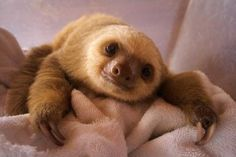 Having a bad day? I double dog dare you not to look at these baby animals and smile with sheer delight! (For the record, baby sloth should have so been in the #1 spot)