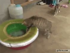 Distractify | The 16 Greatest Battles Fought By The Most Courageous Cats Of Our Time