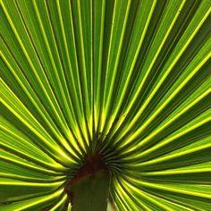 palmetto1f.jpg (408×408)