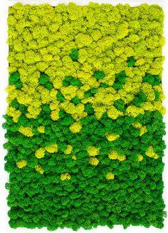 Moss Art, Flower Art, Anime Art, Wall, Flowers, Projects, Outdoor, Design, Decor