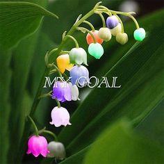 Calla-Lily-Tuber-Summer-Flower-Perennial-Garden-Plant-Bulbs-Perennial-Seeds-Herb