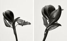 Karen Blixen inspires Sophie Bille Brahe's new collection   Wallpaper*
