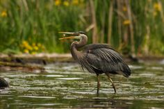 Wild Bird Identification: Bird Watching Basics