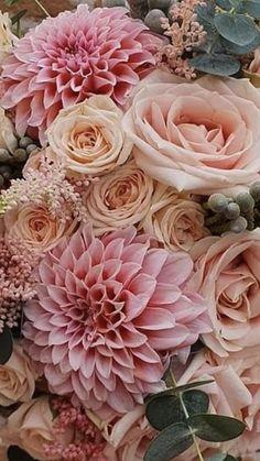 Celosia Flower, Gerbera Flower, Tulips Flowers, Flowers Nature, Spring Flowers, Roses, Wedding Flower Packages, Flower Bouquet Wedding, Beautiful Rose Flowers