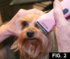 """The Yorkshire Terrier, or """"Yorkie,"""" is one of the most popular AKC breeds. It is at the top of our Bread & Butter client list. These long coats tend to mat and become too difficult for the aver… Grooming Yorkies, Dog Grooming Tips, Dog Grooming Styles, Pet Tips, Yorkshire Terrier Haircut, Yorkshire Terrier Puppies, Yorkie Cuts, Yorkie Hairstyles, Yorkie Haircuts"""