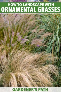 Garden Front Of House, Porch Garden, Balcony Garden, Ornamental Grass Landscape, Ornamental Grasses, Container Gardening, Gardening Tips, Front Yard Landscaping, Landscaping Ideas