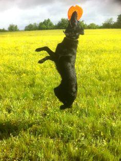 #PerleNoire Dino adopté il y a 11 mois à la SPA de Saint Pierre du Mont! Mon chien parfait ♥