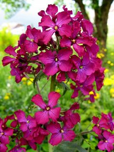 Orchidee selvatiche – Miragolo S.M./ S.S.