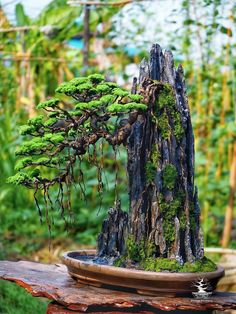 Bonsai Pruning, Bonsai Plants, Garden Terrarium, Bonsai Garden, Mini Plants, Cool Plants, Aquarium Sand, Bonsai Forest, Zen Rock Garden