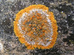 Lichen recording « Reading & District Natural History Society