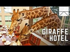 Eating breakfast with giraffes – Vocabulary in Chunks