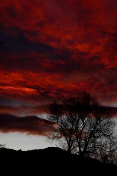 """gyclli:  """"The Sky, at Sunset, Looked Like a Carnivorous Flower"""" by Kira Bajira"""