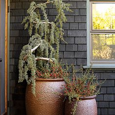 5 stylish fall container designs | Smoke and berries