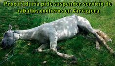 PROCURADURÍA PIDE SUSPENDER SERVICIO DE CABALLOS COCHEROS EN CARTAGENA