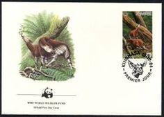 The Okapi Postcard. Version 2! okapi postcard, okapi art, okapi power