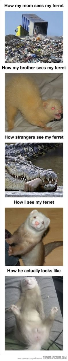 So True! And the photo before the last one is a copy of my ferret! Truth about ferrets…
