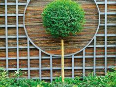 Feng Shui Garten Bonsai Baum Bambus