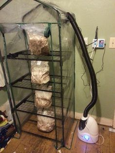 homestead - My recently built mushroom fruiting chamber, with four bags of oyster mushrooms nearly ready to produce. Garden Mushrooms, Edible Mushrooms, Stuffed Mushrooms, Wild Mushrooms, Mushroom Spores, Mushroom Cultivation, Growing Mushrooms Indoors, Culture Champignon, Mushroom Grow Kit