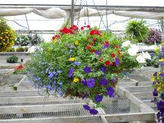 Plant Land, Kalispell, MT