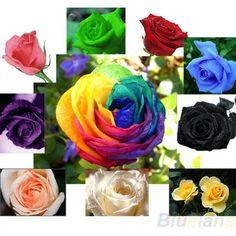 2015 Hot Sale 9 colors Mix Color Rose Seeds Blue Red Purple Pink Black Rainbow Petal Plants Home Garden Flowers Bonsai