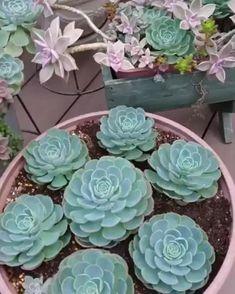 Garden Projects, Flowers Perennials, Flower Pots, Plants, Succulents, Succulent Planter Diy, Bonsai Plants, Succulent Terrarium, Planting Succulents
