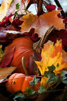 Pumpkin and fall foliage. Autumn Day, Autumn Leaves, Pumpkin Leaves, Maple Leaves, Autumn Scenes, Autumn Aesthetic, Seasons Of The Year, Fall Pictures, Fall Harvest
