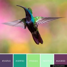 Hummingbird | purple and green | color palette inspiration | digital art palette and brand color palette.