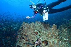 Darwin discovered to be right: Eastern Pacific barrier is virtually impassable by coral species