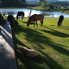 Portal Municipal de Turismo de Urupema Portal, Horses, Animals, Travel, Tourism, Life, Animales, Animaux, Animais