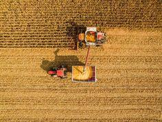 Shadows of the setting autumn sun. #aerial #birdseye #drone #gold #fall #harvest #farmlife #farming #crisp #color #case #corn #dji #dronelife #ottawadrone #dronecanada #dronegear #bestoftheday #beautiful #instagood #picoftheweek