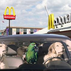 Dogs early adopters for Self Driving Cars #dogs #driving #pets  https://butisit.ca/2016/12/16/dogs-early-adopters-for-self-driving-cars/