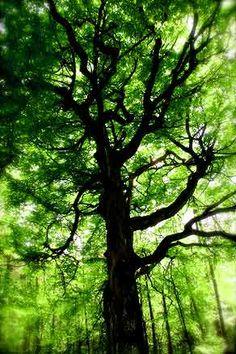.i like this tree