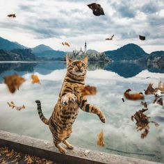 Suki Cat Adventure Cat 🐈 My human Cute Kittens, Cute Cats And Dogs, Animals And Pets, Cats And Kittens, Cute Animals, Ragdoll Kittens, Kitty Cats, Miaou Miaou, Bengal Cat Personality