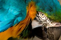 Eye of the macaw. photo by James Robinson via onebigphoto.com