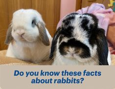 Do you know these facts about rabbits! #rabbits Wild Rabbit, Bunny Rabbit, Rabbit Facts, Rabbit Behavior, Matted Hair, Rabbit Eating, House Rabbit, Natural Instinct, Binky