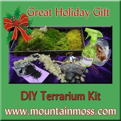 Moss For Sale, Diy Terrarium Kit, Holiday Gifts, Xmas Gifts