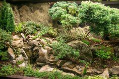 Amazing miniature indoor water garden