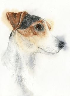 Jack Russell by Hummingbird26
