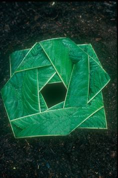 Andy Goldsworthy | Foxglove leaves split down centre vein laid around hole Leeds, Yorkshire October 1977