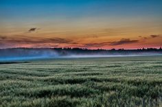 Barley field at Midnight in August, Finland, by Heikki Rantala Outdoor Life, Finland, Fields, Landscapes, Waves, Mountains, Nature, Historia, Outdoor Living